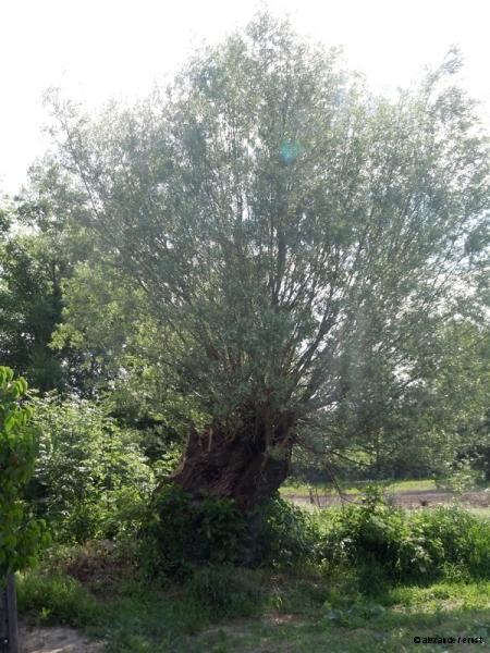 Grafensulz Lebensbaum